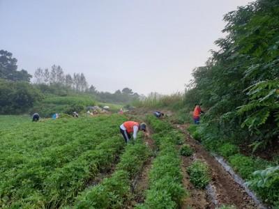 농촌일손돕기(장애인가정) 자원봉사
